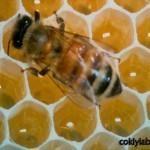 Arılar neden bal peteğini altıgen yapıyor bilen varmı ,ögrenin