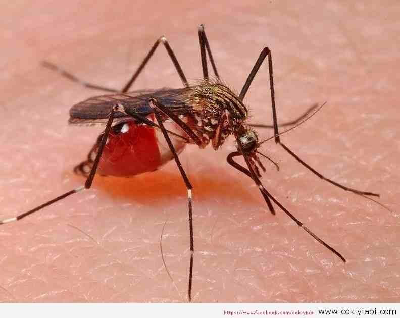 Sivri Sinek Isırdığında Neden Kaşınırız