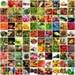 Hangi SEBZE nezaman Yenmeli Ve  Mevsime Göre Sebze Tüketilmeli