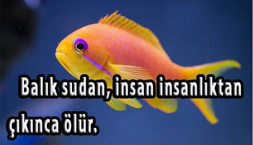 Balıkla İlgili sözler Ve Balıkla ilgili Çok güzel Atasözleri