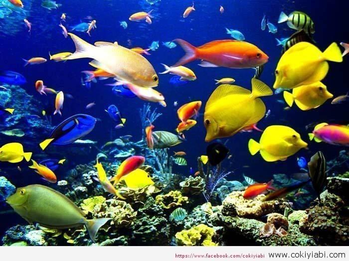 Akvaryumda Balıklar Neden Ölür Ve Ne yapılmalıdır