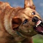 Köpekler Neden ve Hangi Durumlarda Isırır
