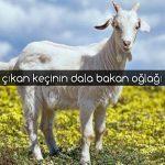 Keçi ile ilgili Atasözleri ve Açıklamaları