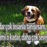 Köpek İlgili söylenmiş Anlamlı Sözler