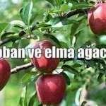 Etkileyici Çoban ve Elma Ağacı Hikayesi
