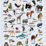 B Harfi ile Başlayan Hayvan İsimleri
