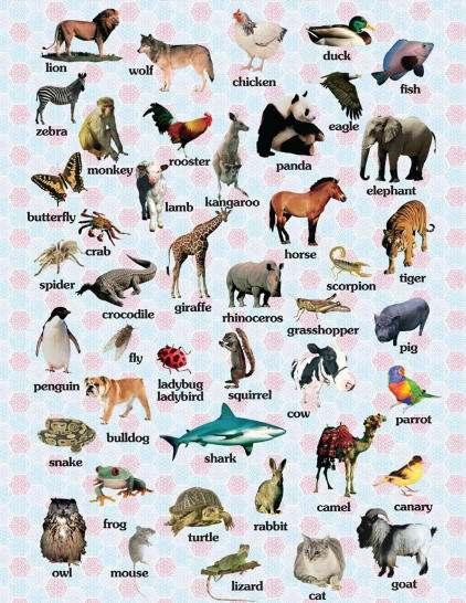 A dan Z ye Kadar Hayvan İsimleri