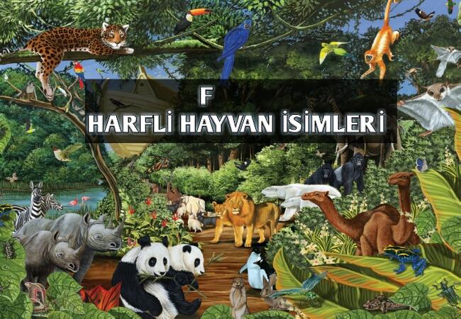 F Harfi ile Başlayan Hayvan İsimleri