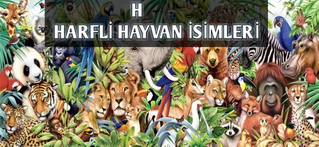 H Harfi ile Başlayan Hayvan İsimleri