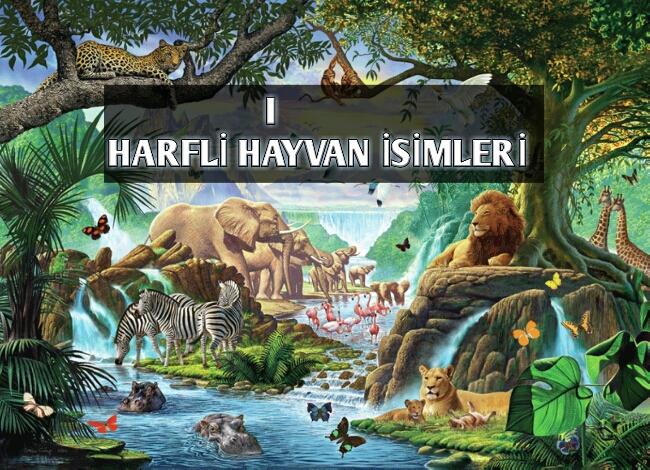 I Harfi ile Başlayan Hayvan İsimleri