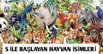 S harfli hayvan isimleri