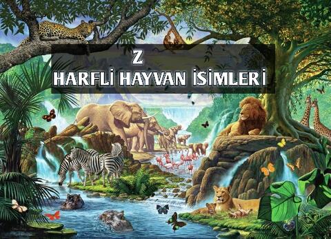 Z Harfi İle Başlayan Hayvan İsimleri
