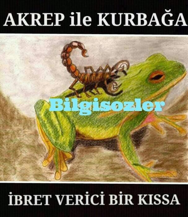 Kurbağa Ve Akrep Hikayesi Güzel Sözler