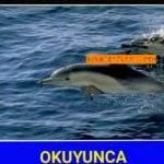 İyilik Yap Denize At Hikayesi