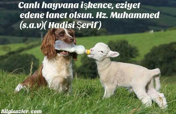 Hayvanlar ile ilgili Anlamlı Mesajlar