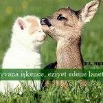 Hayvan Sevgisi ile ilgi Mesajlar