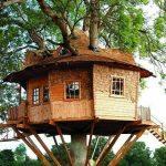 Ağaç İçinde Ahşap Ev Resimleri