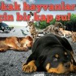 Sokak Hayvanları ile ilgili Sloganlar