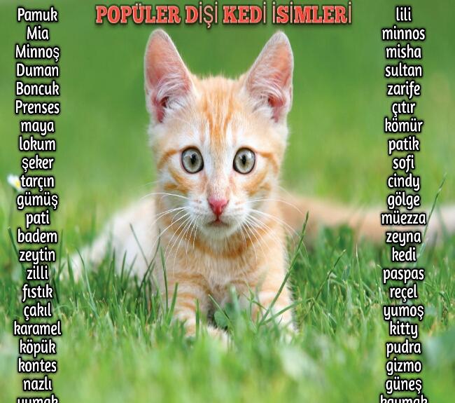 Popüler Dişi Kedi İsimleri