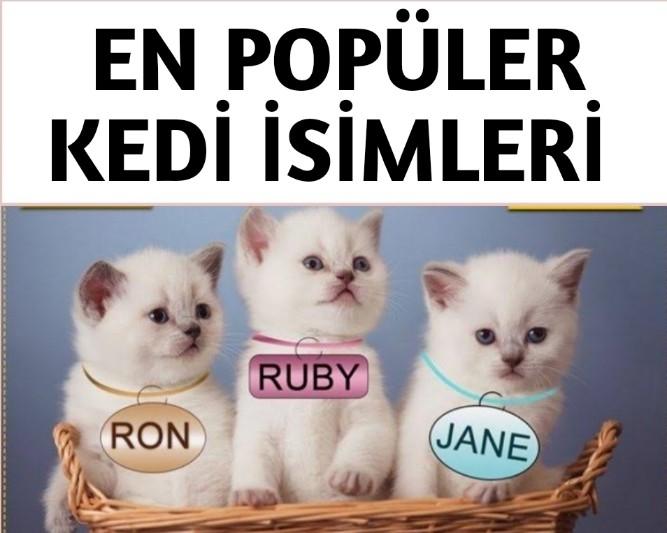 Güzel Kedi isimleri
