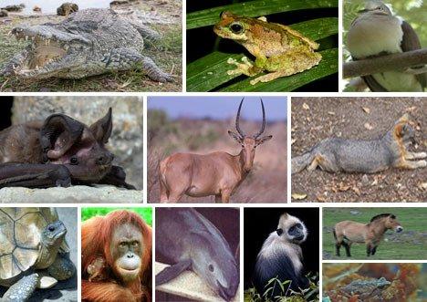Hayvanlar Hakkinda Şaşırtıcı Bilgiler