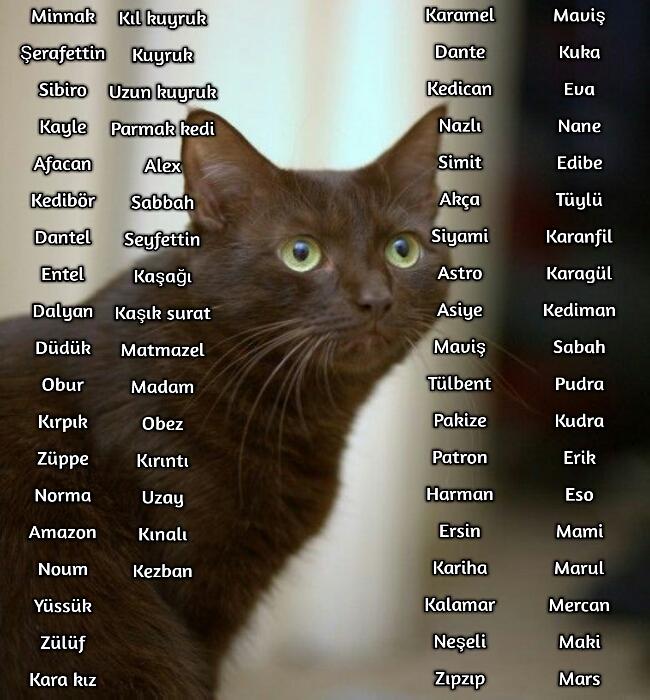 Kedi İsimleri (Popüler )
