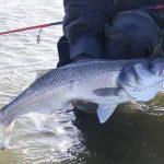 Levrek Balığı Nasıl Tutulur