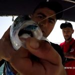 Sahte Yem ile Levrek Balığı Yakalama