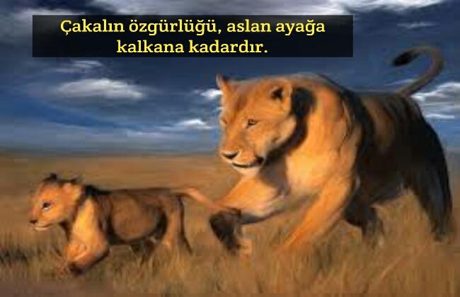 Aslan sözleri