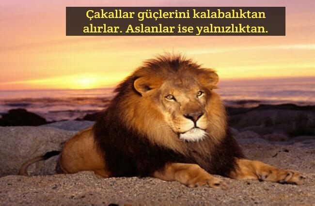 Çakal aslan sözleri