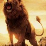 Çakal ve aslan ile ilgili sözler