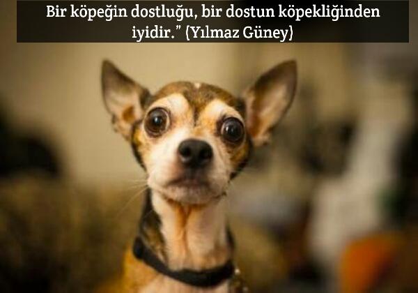 Köpeğin Dostluğu ile ilgili Güzel Sözler