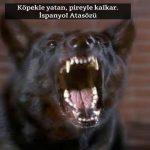 Köpek ile ilgili Anlamlı Sözler