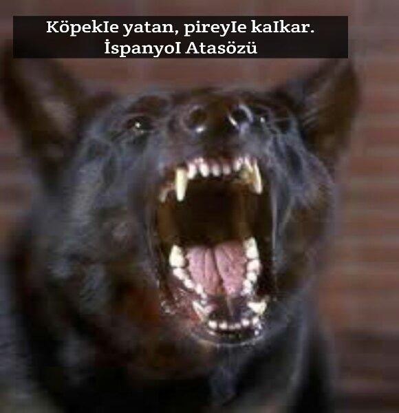 Köpekler ile ilgili Anlamlı Sözler
