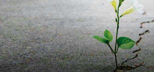 Umut cesaretin yarısıdır