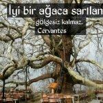 Ağaç sözleri