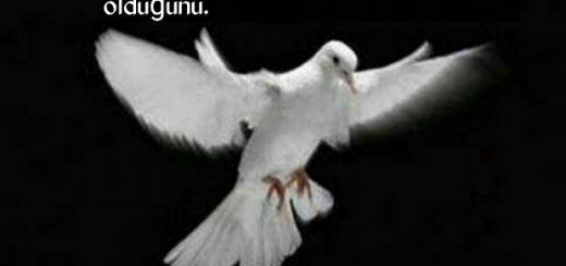 Güvercin sözleri indir