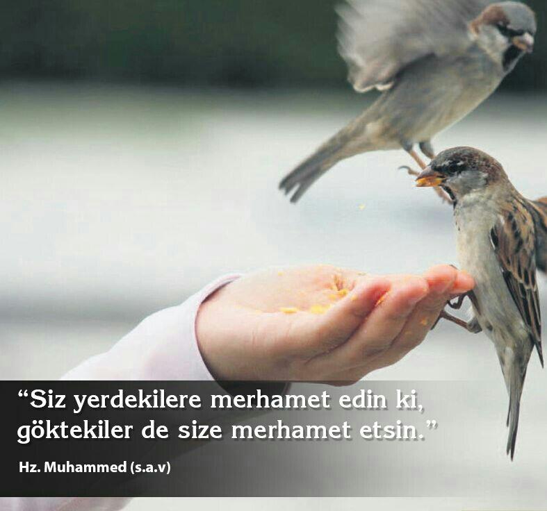 Merhamet ile ilgili en güzel hadisler