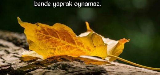 Yaprak sözleri