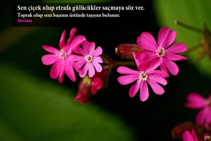 çiçekler ile ilgili sözler kısa