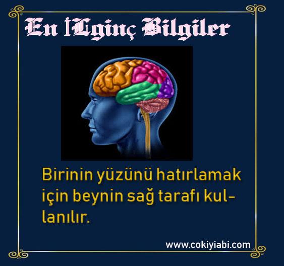 beyin ile ilgili ilginç bilgiler