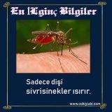 sinekler hakkında ilginç bilgiler