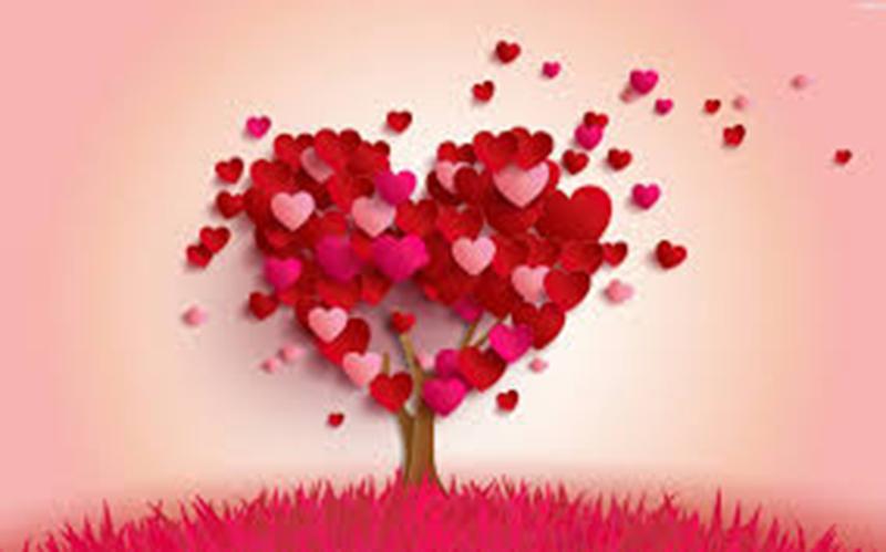 Aşkın Anatomisi Bölüm(2)