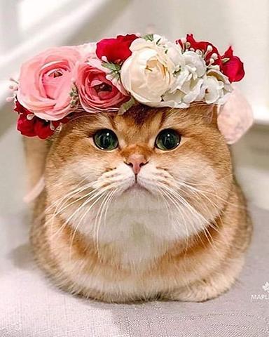 Sevimli Kedi Ve Köpek Resimleri