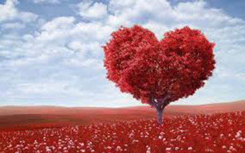 Aşkın Anatomisi Bölüm(1)