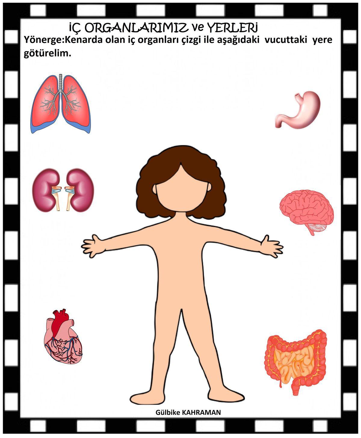 Organlarimizin Yerleri Okul Oncesi Guzel Sozler Ve Bilgi