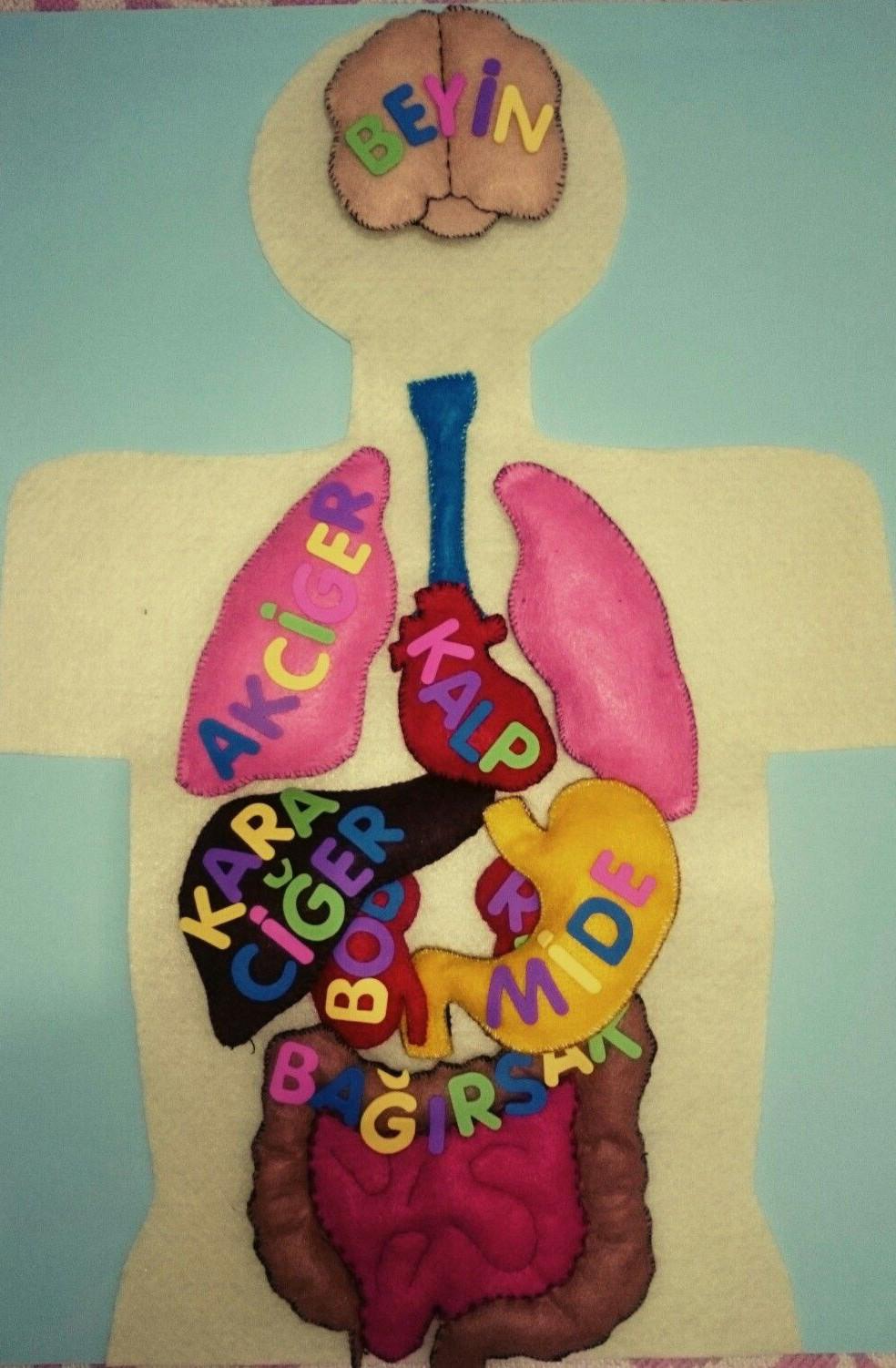 Organlarımızın Yerleri Okul öncesi Güzel Sözler