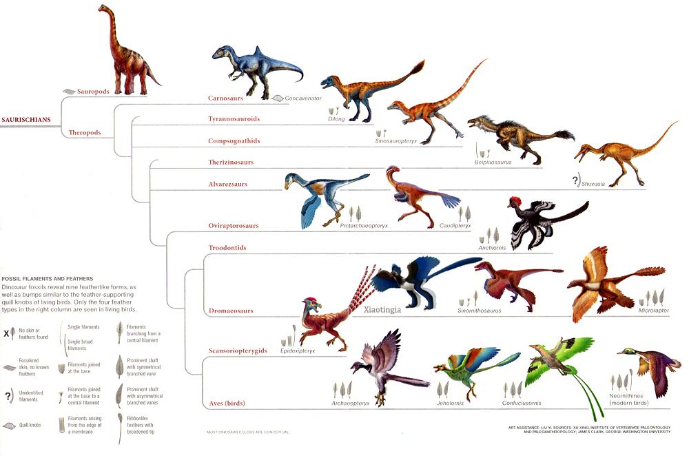 Dinozorlar ( Hakkında Tüm Bilgiler)