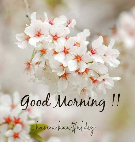 100 Good Morning Messages 2019 Wishes And Quotes Guzel