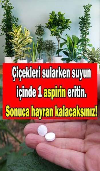 Aspirin Hapının Çiçek ve Bitkilere Faydaları